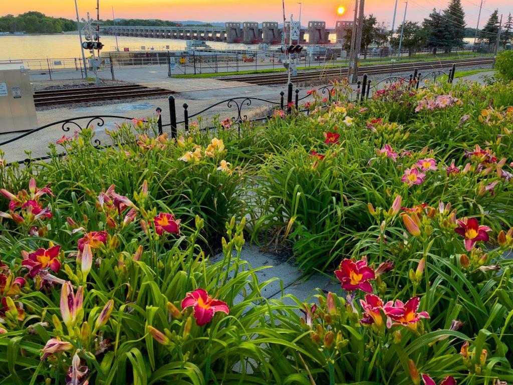 Daylilly Garden at Sunset